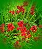 Wallflowers (Mary (No Group Invites Please)) Tags: hennysgardens