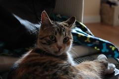 Who's there? (andreanatalizio94) Tags: gatto mew felino occhi