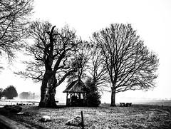 Just Know.. (Arjan Grendelman) Tags: arjangrendelman netherlands nature old tree blackwhite lyrics lightroom6 landscape leica digilux2