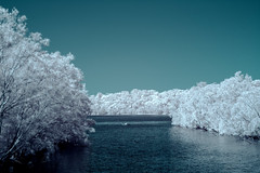 Narrabeen Lakes IR (Chad Ajamian) Tags: infrared ir d70 nikon landscape sydney narrabeen lakes false color