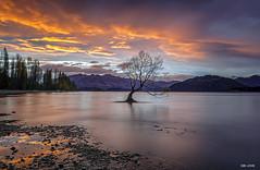 THAT WANAKA TREE (sibijohn photography) Tags: wanakatree thatwanakatree southisland newzealand