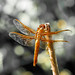Red Dragonfly art-1 copy