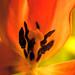 Vertical Orange