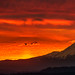 Monster in Sea of Fire (leighchen) Tags: sunrise landscape portland mountain hood fire cloud monster red