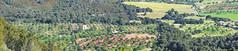 Santueri 00046-Pano (Sebas Adrover) Tags: baleares balearicislands balears españa felanitx illesbalears mallorca mediterranean mediterrani mediterráneo santueri spain blossom castell castillo flores flors murada muralla tree es