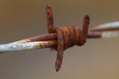 Rusty Barb (steve_whitmarsh) Tags: macro closeup metal orange fence macromondays madeofmetal flickrfriday rust smileonsaturday