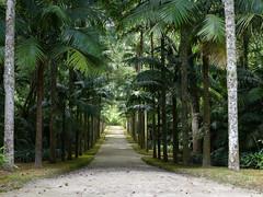 Terra Nostra (RIch-ART In PIXELS) Tags: furnas sãomiguel azores portugal leicadlux6 leica dlux6 palmtree nature flora path botanicgarden