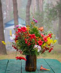 Foggi morning (kud4ipad) Tags: 2016 prokhorovka morning flower bouquet outdoors fog forest