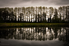 Naturalbarrier-9197-2 (toniertl) Tags: toniphotoxoncouk naturalbarrier trees reflection standingtogether backlit sunbehind darkwater riverthames canal slowwater stormyclouds