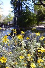 Rocher des Doms (carolegline) Tags: rocherdesdoms avignon water france parc flower fleurs spring printemps