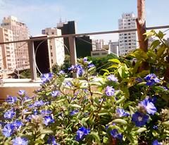 Santa cecília-SP (pâmelahaydee) Tags: flor predios sp