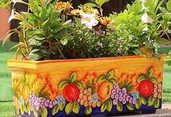 Amalfi coast April flowers (jackfre 2) Tags: italy amelficoast sorrento amalfi positano flowers post planters urn