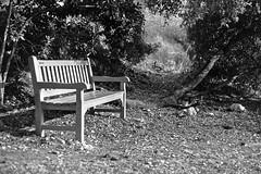 Banco solitario / Lonely bench (Ignacio Arráez) Tags: blancoynegro blackandwhite bn bw blackwhite analógico analogue analog 35mm 35mmfilmcamera kodaktrix400 kodak kodakfilm kodaktx kodaktrix banco bench
