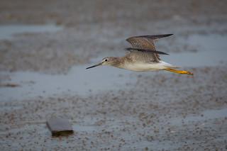 Bird Over Board