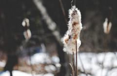8708 (taralees) Tags: april sunshine springpartyhasbegun springonrabbitridge floraandfauna