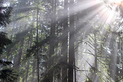 Love Those Rays (21mickrange) Tags: lscr lowerseymourconservationreserve northvancouver northshoremountains seymourvalley seymourriver homesteadtrail figure8trail fishermanstrail bc hiking forest trees