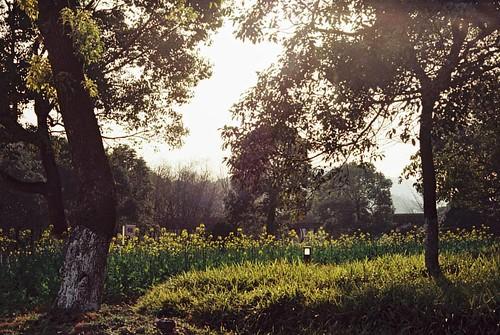杭州尐大學興種菜......... Kodak VISION3 250D/5207. 135. #135film #35mm #135 #35mmfilm #kodak #kodakfilm #film #5207 #250d #Leica #konica #hexar #china #sunset #kodakvision3 #hexarrf #city #citylife #life #university #filmcamera #filmphotograph #filmphotography #f