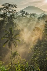 Mount Agung and The Valley (Krist Setyawan) Tags: countryside balitourism tourism scenery valley morningscenery nature raysoflight indonesia landscape bali mountagung