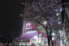 IMG_0523 (digitalbear) Tags: canon powershot g9x markii mark2 nakano dori sakura cherry blossom blooming fullbloom tokyo japan yozakura hanami