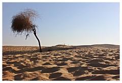 Solitary,Thar desert,Jaisalmer (Anindya_Doordarshan) Tags: desert thar sand jaisalmer rajasthan rajputana rajput history arid india canon ngc
