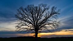 Sunset (ramseybuckeye) Tags: sunset oak tree sky colors blue sunderland road allen county ohio hd da 15 ltd pentax life