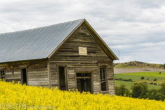 NT3.0033-CW1605618_38591 (LDELD) Tags: palouse cottonwood idaho unitedstates us fields green spring clouds stormy canola flowers old abandoned school house schoolhouse oneroomschool stockcreekschoolhouse