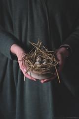 Happy Easter! (CarolienCadoni..) Tags: sonyslta99 sony sal85f14z nest eggs hands bokeh dof photography naturallight f7d foto7daagse eeneitje
