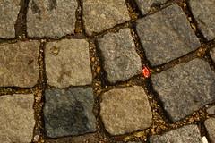 Ostern vorbei (raumoberbayern) Tags: ostern easter pflaster plaster urbanfragments red rot robbbilder stone cobblestone steine pflastersteine munich münchen