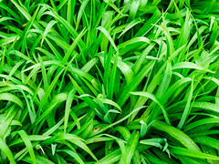 Spring Time (danielfoster437) Tags: grass groen delente plants springplants seattle greengrass springtime seattlespring fujifilmgsx50s groengras delenteplant gras seattlelente greenery delentetijd planten groeneplanten spring greenplants