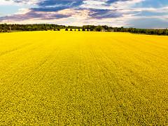 Endless Yellow (harold.burnley) Tags: kilmarnock virginia unitedstates us