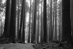 渺渺人間 (lgf55555(基福)) Tags: summiluxm 11421 asph m leica 14 21mm 黑白 人 森林