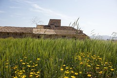 Spain (Bob Bain1) Tags: spain murcia mazarron travel flowers building canoneos landscape yellow nature lapinilla ruin