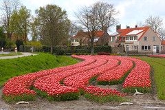 IF8A5401 (cwhilbun) Tags: flevoland holland netherlands spring tulips outdoors noordoostpolder tulpenfestival 2017