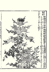Thistle (Japanese Flower and Bird Art) Tags: flower thistle cirsium asteraceae morikuni tachibana kano woodblock picture book japan japanese art readercollection