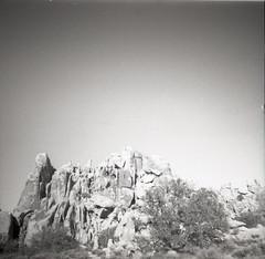 in the desert (beth maciorowski) Tags: 35mm film dianamini desert lomo analog joshuatree