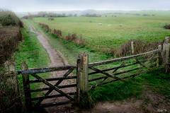 Britain's pastoral 英國的田園 (T.ye) Tags: pastoral green grass gate mist landscape sheep lamb 英國 田園 羊群