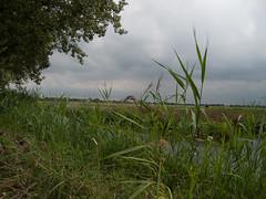 2009-08-25-0005.jpg (Fotorob) Tags: water nederland polder utrecht holland netherlands niederlande breukelen