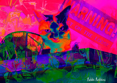 Gypsy On The Loose (brillianthues) Tags: cat raven bird calico abstract colorful collage photography photmanuplation photoshop