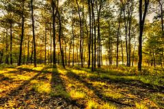 In The Shadows (tristanotierney) Tags: trees light sunset shadow ny newyork tree forest shadows unitedstates upstate reservoir ashokan catskills ashokanreservoir thecatskills westhurley catskillsmountains