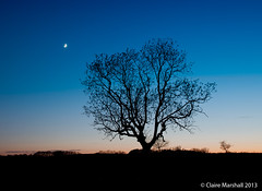 The Oak Tree at sunset (Claire Marshall 3) Tags: sunset moon tree night canon oak
