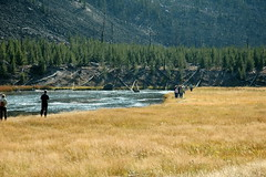 495 - People watching Elk (Scott Shetrone) Tags: animals forest scenery events places rivers yellowstonenationalpark elk mammals 7th anniversaries wymoing