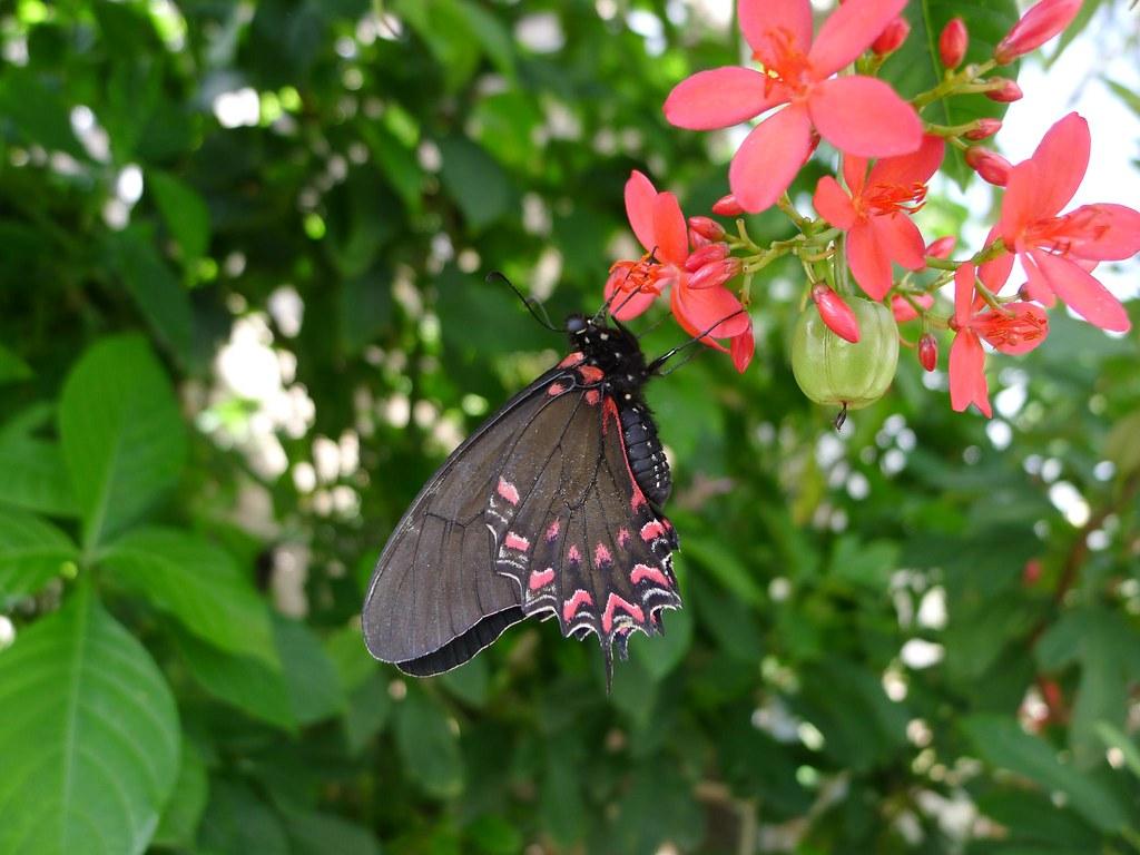 The Butterfly Pavilion Denver Colorado