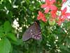 Butterfly Pavilion, Denver