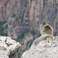 Looking down the Abyss (oefe) Tags: arizona usa squirrel grandcanyon az grandcanyonnationalpark