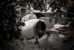 Forgotten II (RafalZych) Tags: cold training private war fighter aircraft jet poland polish collection communist junkyard wreck relics gurevich lodz mikoyan d mig15 uti mikojan lublinek aircraftsalvage gurewicz