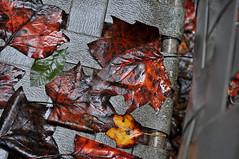 Careful Where You Sit! (BKHagar *Kim*) Tags: autumn fall wet leaves rain leaf al chair seat alabama athens rainy elkriver riversong bkhagar