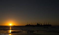 (Chica DeHumo) Tags: port ship harbour seagull