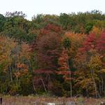 Fall color at Morgan Mudflats thumbnail