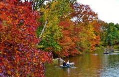 Central Park-The Lake, 11.02.13 (gigi_nyc) Tags: nyc newyorkcity autumn leaves centralpark autumnleaves autumncolors fallfoliage thelake theramble leafpeeping thisisnewyorkcity
