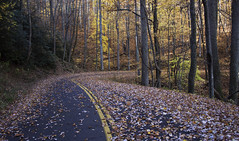 Sometimes you just need to see where a road goes. (DFChurch) Tags: road mountain leaves rural tn hwy 32 cosby